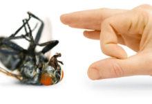 Photo of شركة مكافحة حشرات بالدمام : مكافحة الصراصير والفئران والنمل الابيض