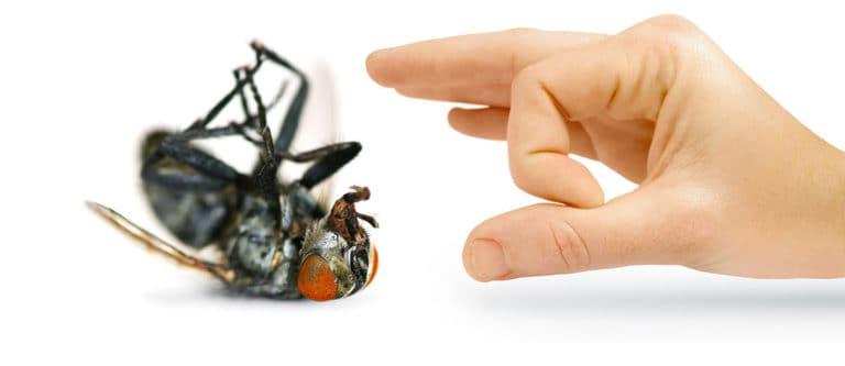 مكافحة الحشرات بالدمام والخبر