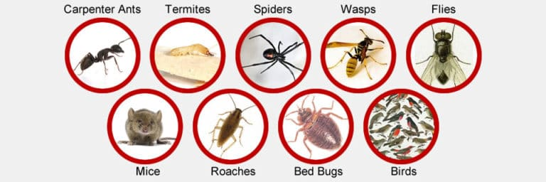 مكافحة حشرات بالدمام, شركة ركن نجد