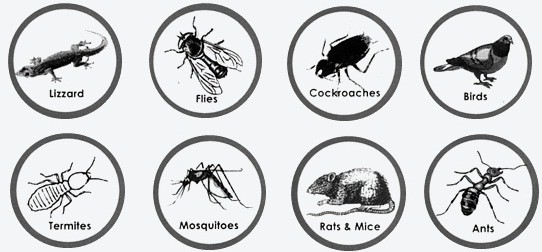 pest control company in ahsa