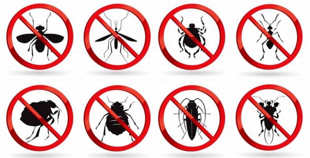 مكافحة حشرات بالخرج