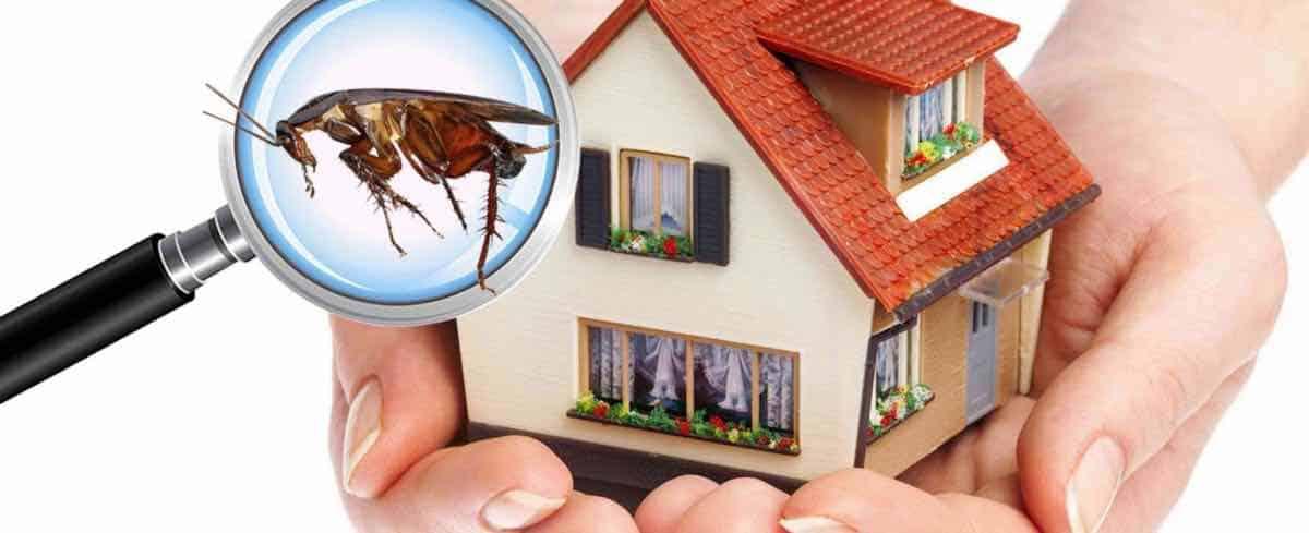 Photo of شركة مكافحة حشرات بالرياض – ضمان 12 شهر خصم 30%