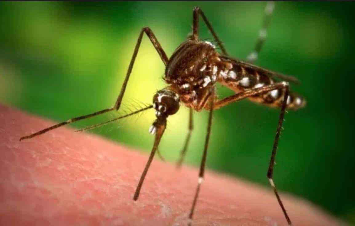 Means of struggle against mosquitoes