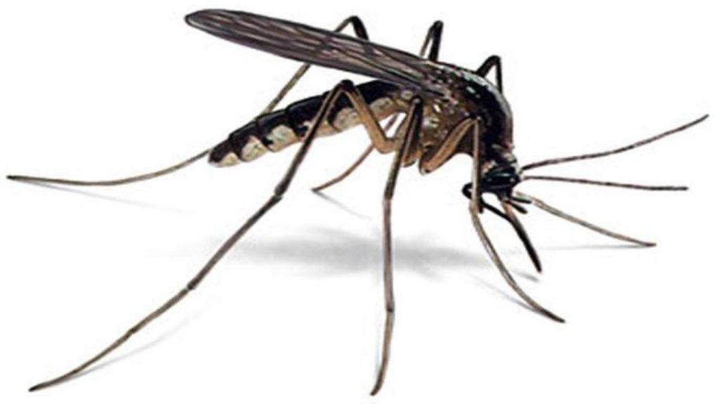 طرق مكافحة البعوض