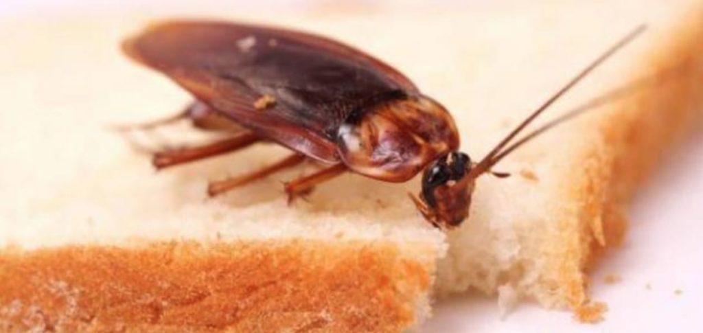 كيفية التخلص من الصراصير