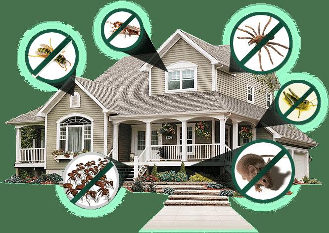 طرق مكافحة الحشرات في المنزل, شركة ركن نجد