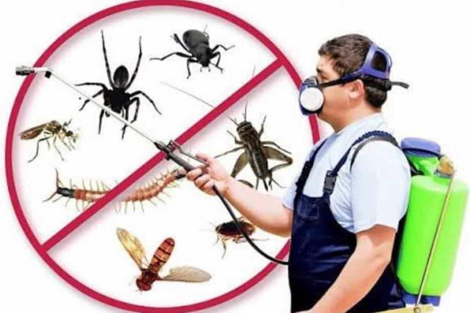 مكافحة حشرات بجازان, شركة ركن نجد