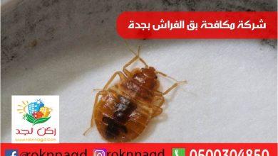 Photo of شركة مكافحة بق الفراش بجدة بضمان 3 شهور