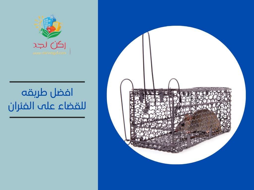 طريقة للقضاء علي الفئران