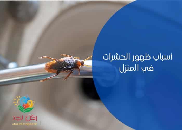 اسباب ظهور الحشرات